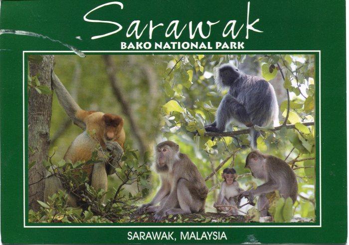 malaysia-monkeys-bako-national-park